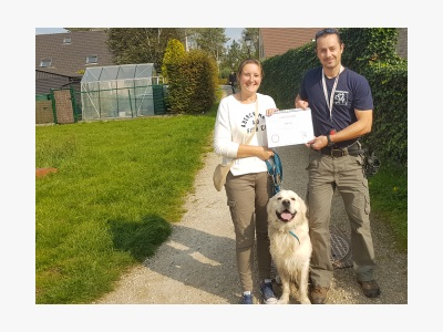 hondentraining met Golden retriever Benji