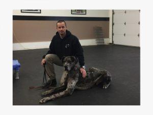 hondentraining met Deense dog Blue