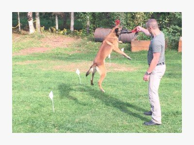 Mechelse schaper hondentraining