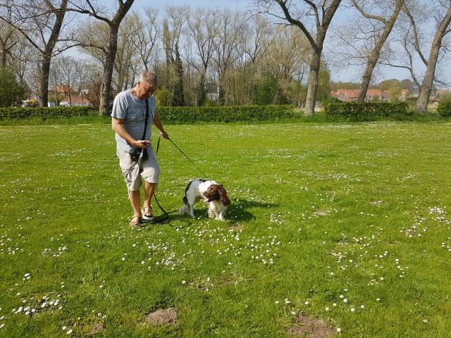 English Springer Spaniel Leon recall oefening