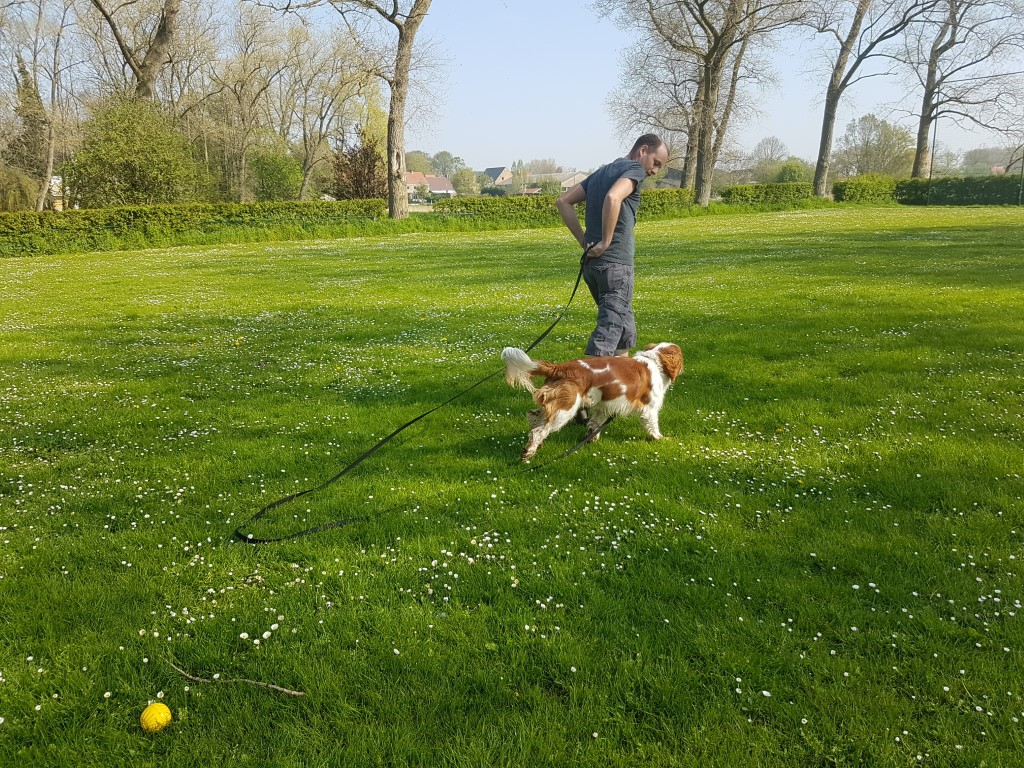 Welsh Springer Spaniel Peppin training oproepen 3