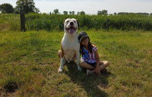 Gobobby hondentraining ervaring met pitbull Bob