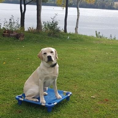 training met Labrador Walter