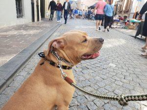 Hondentraining Brugge