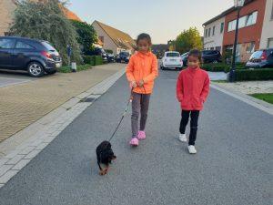 Hondentraining Sint Michiels