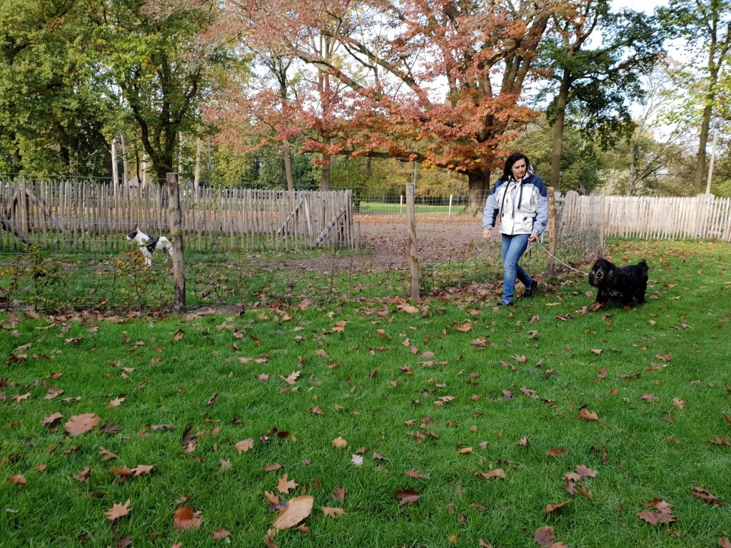 Hondentraining aan hondenweide
