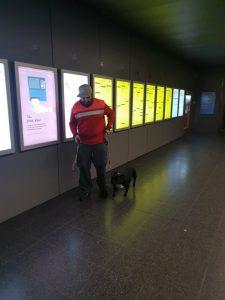 Hondentraining socialisatie en habituatie aan Brugge Station