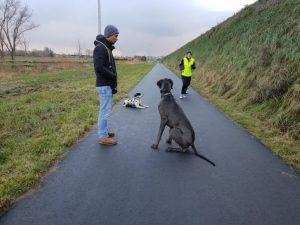 Deense dog ecollar training