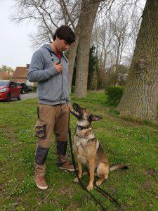 Mechelse herder e-collar training