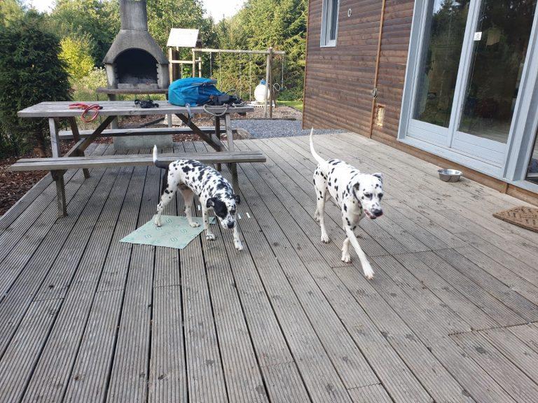 socialisatietraining honden