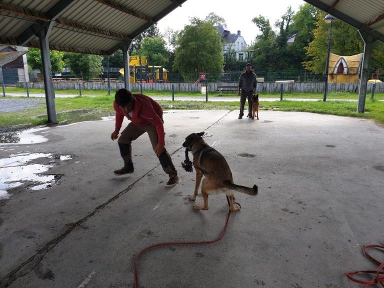 ecollar training, spel en gehoorzaamheidstraining met mechelse herder