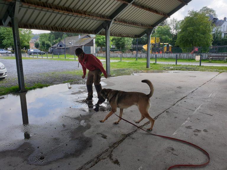 ecollar training en gehoorzaamheidstraining met mechelse herder