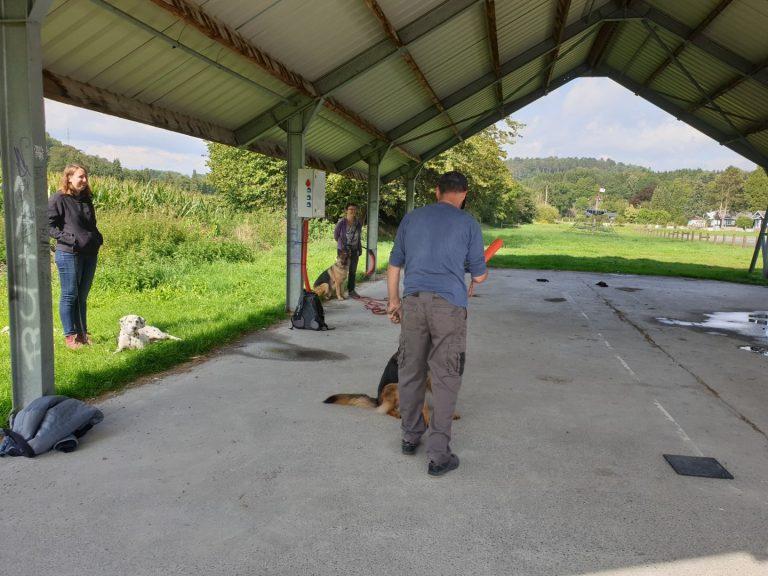 impulscontrole en spel met duitse herder