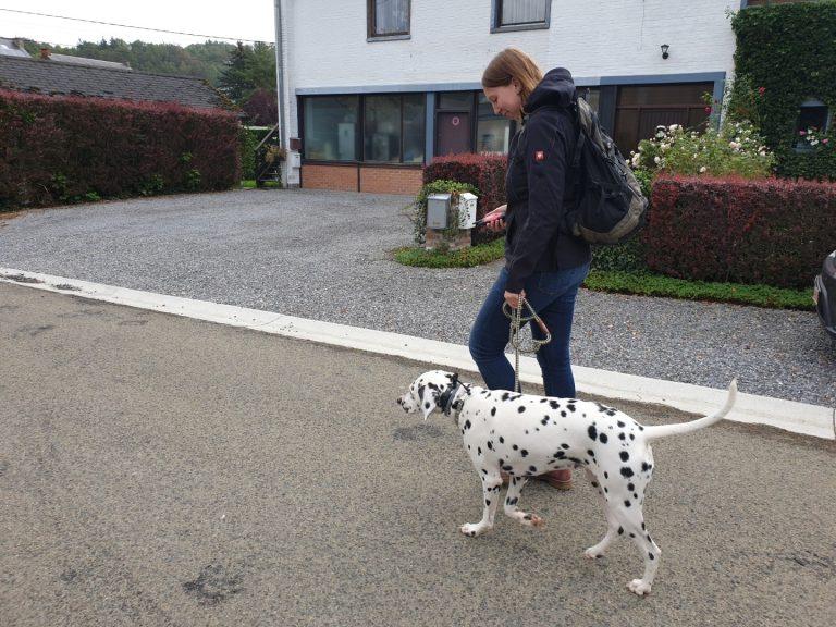 ecollar training met dalmatiër