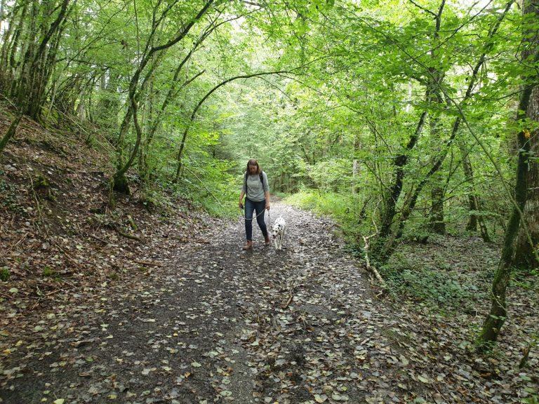wandeling en ecollar training