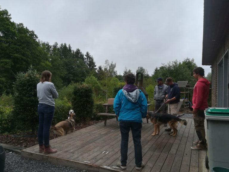 gobobby workshop habituatie met duitse herder en mechelse herder en dalmatiër