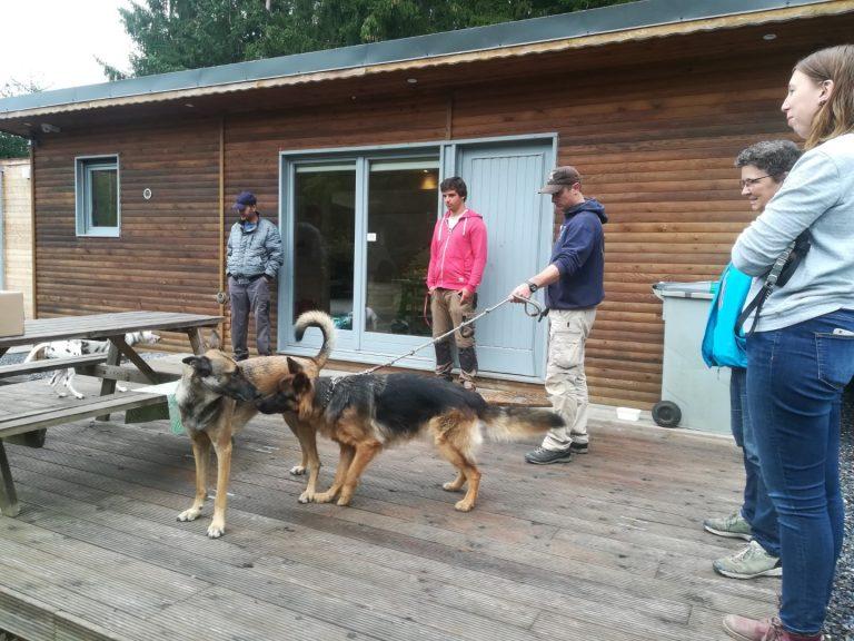 gobobby workshop habituatie met duitse herder en mechelse herder