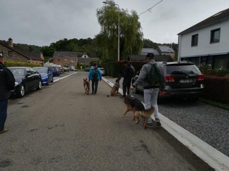 duitse herders en mechelse herder training op de markt