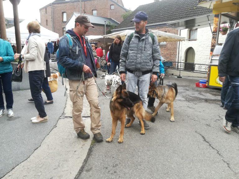 duitse herders training op de markt