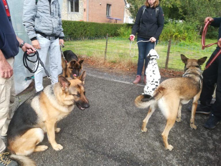 duitse herders training met baasjes