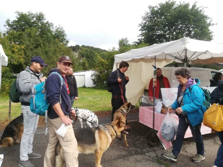 duitse herders en mechelse herders op de markt