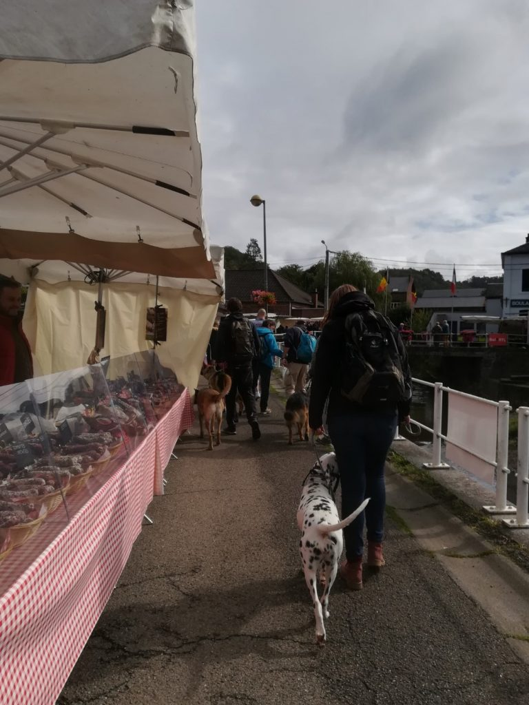 Dalmatier training op de markt