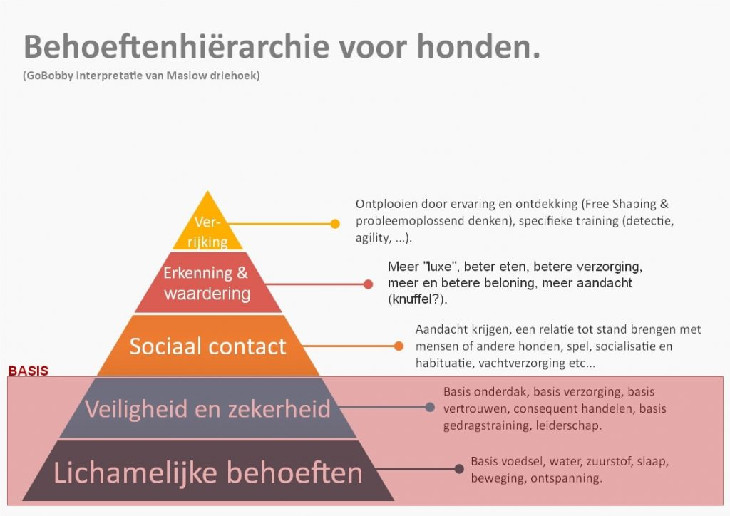 Maslow driehoek BASIS hondentraining